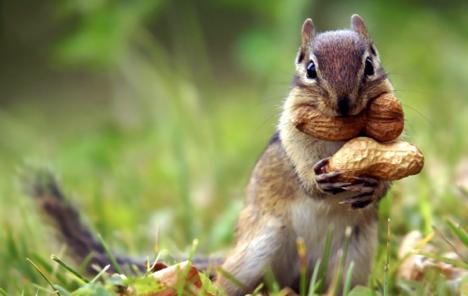 energetic squirrel